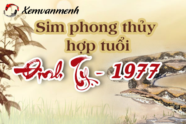 xem-sim-phong-thuy-hop-tuoi-dinh-ty-1977