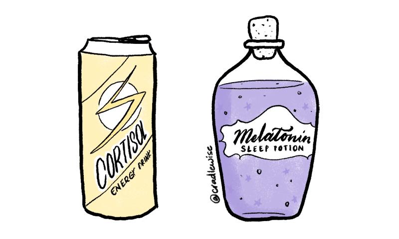 Bottle of energy drink depicting cortisol and bottle of sleeping potion depicting melatonin