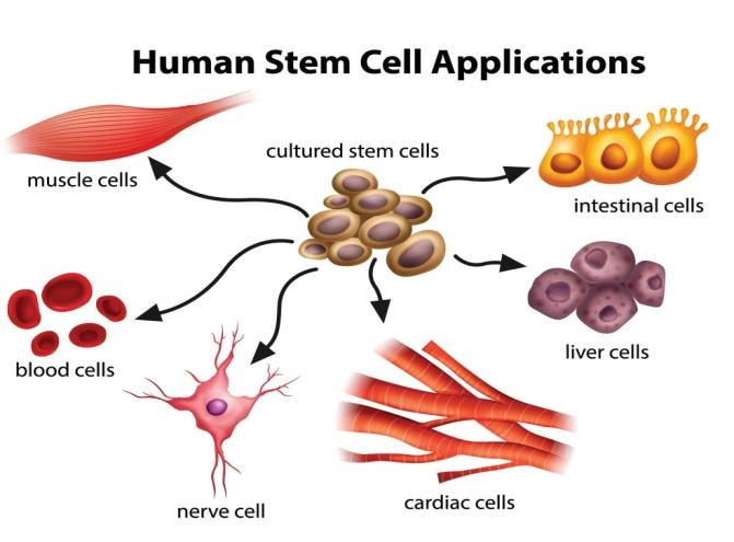 C:\Users\dELL\Desktop\STEMCELLAPPLICATIONS[1].jpg