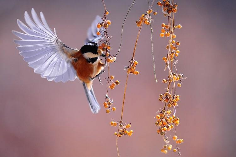 How to Take Bird Photos