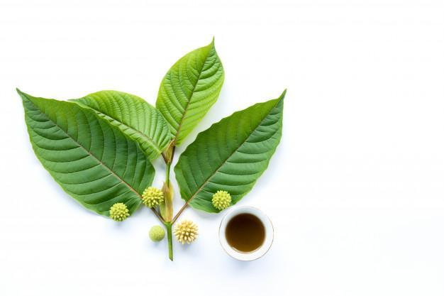 Leaves, flowers, fruits and liquid of kratom or mitragynine on white background isolated Premium Photo