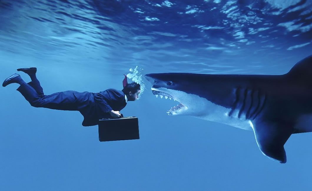 swimming-with-sharks.jpg