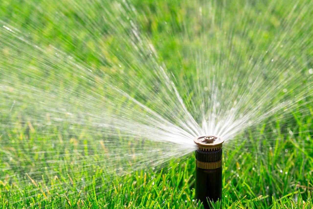 garden, gardening, watering plants, tips for gardeners, beginner gardener, planting vegetables, getting started