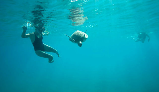 Swim with Sea Turtles – Barbados | Princess Cruises