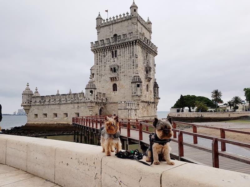 Visitar Lisboa con perros