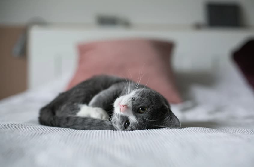 Cat picture compressed as JPG