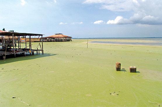 http://www.ecologismo.com/wp-content/uploads/2010/06/Contaminaci%C3%B3n-de-Lago-de-Maracaibo-Venezuela.jpg