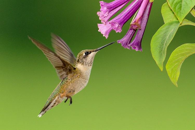 Take Bird Photos with Laser Trigger