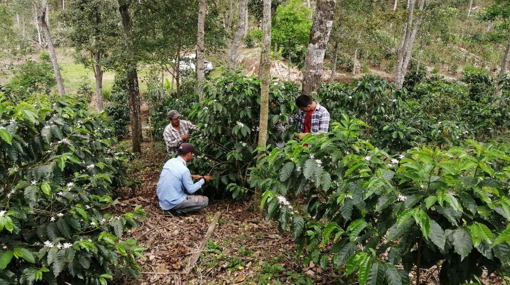 agricultores e pesquisadores de café
