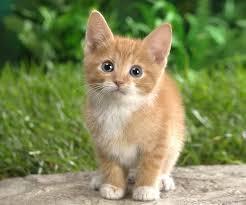 Image result for kittens