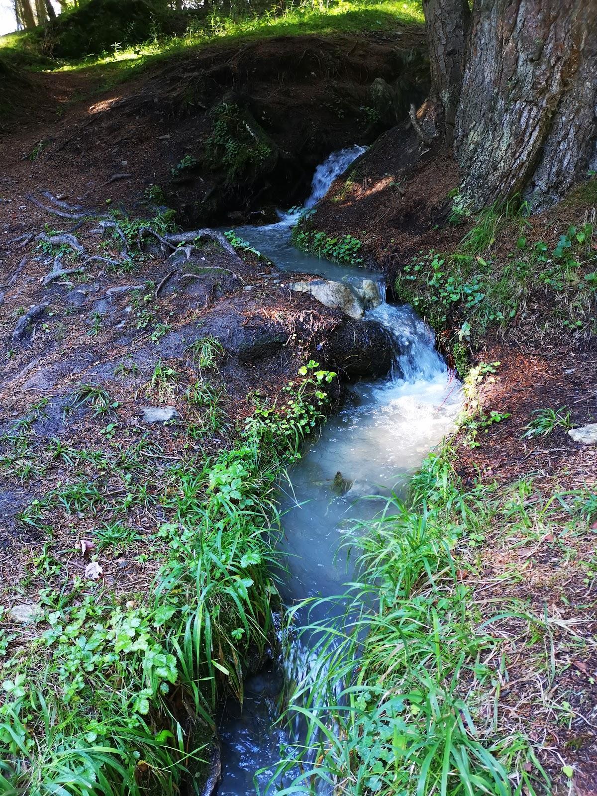 erholung in der natur - Waldbad