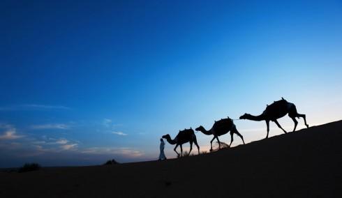 lux3081ls-99690-Camel trekking