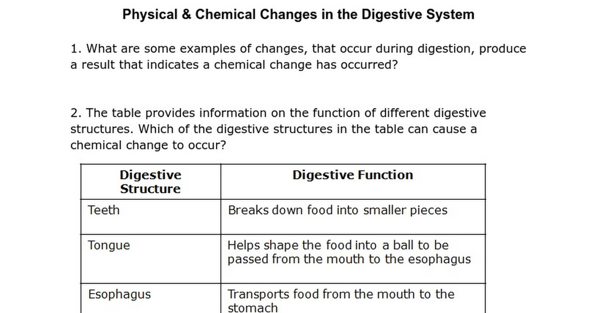 Physical Chemical Changes In The Digestive System Google Docs