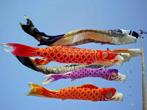Ngày hội cá chép tại Nhật Bản