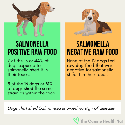 Study on Beagles showed raw fed Dogs exposed to Salmonella shed it in their feces at a rate of 44% but did not show signs of disease.
