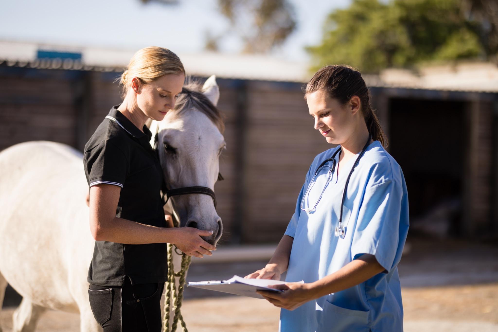 a horse vet and vet tech discuss treatment