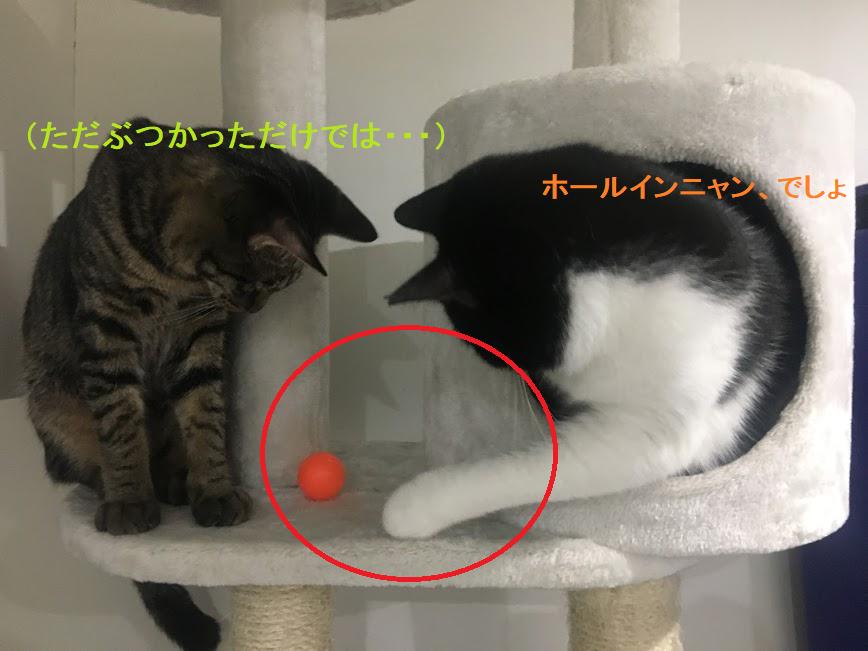 猫が肉球を舐めたり噛んだりする4つの理由。食べれる肉球焼き菓子も