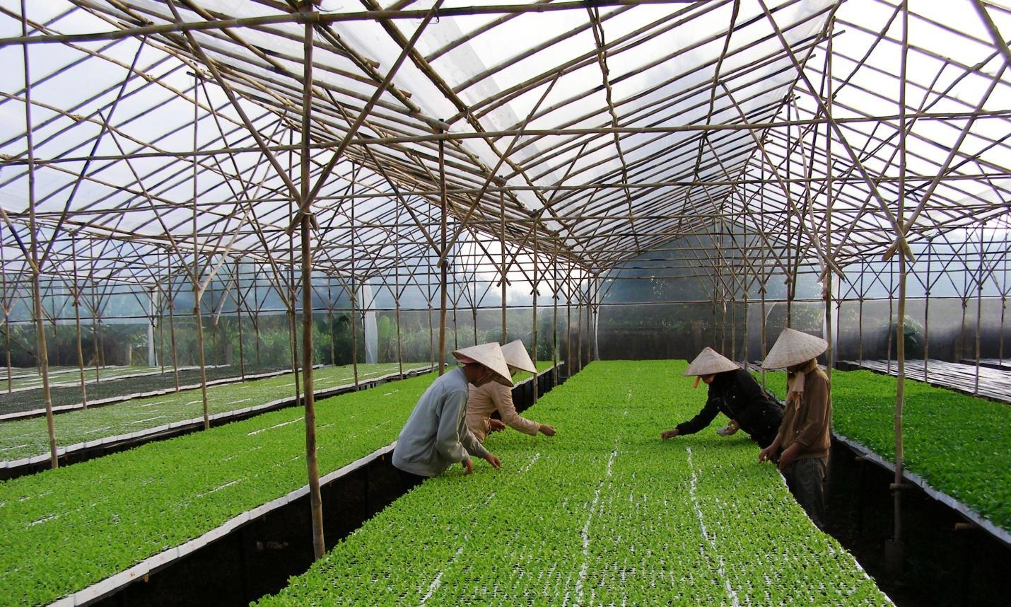 4-mô hình trồng rau Israel.jpg