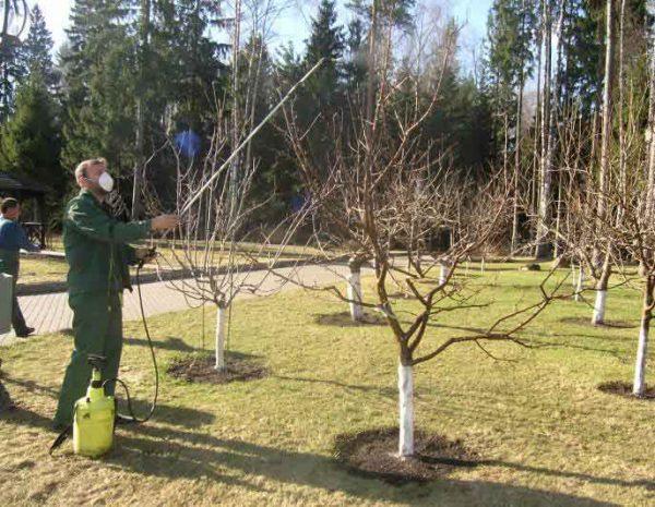 Опрыскивание деревьев осенью перед зимой