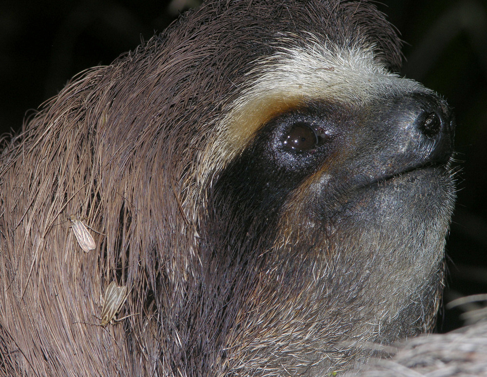 Image result for sloths and moths