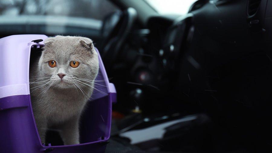 5 правил, яких варто дотримуватись для забезпечення безпеки домашніх тварин в поїздках - Зображення 2