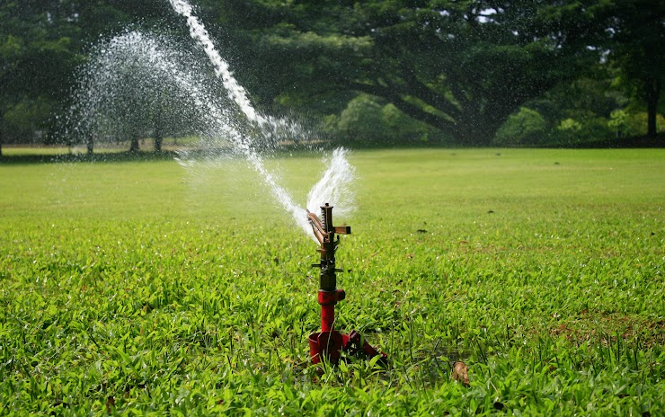 We ask that the yard be watered for at least 30 minutes the night before and then the sprinklers be turned off during the duration the greeting is in place.
