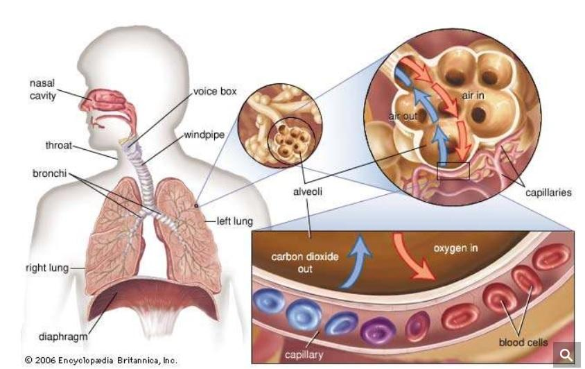 top respiratory diseases