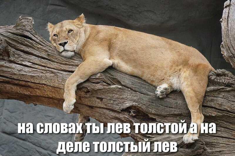 На словах ты Лев Толстой, а на деле...