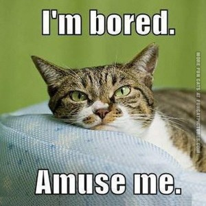 805673865-funny-cat-pics-im-bored-amuse-me.jpg