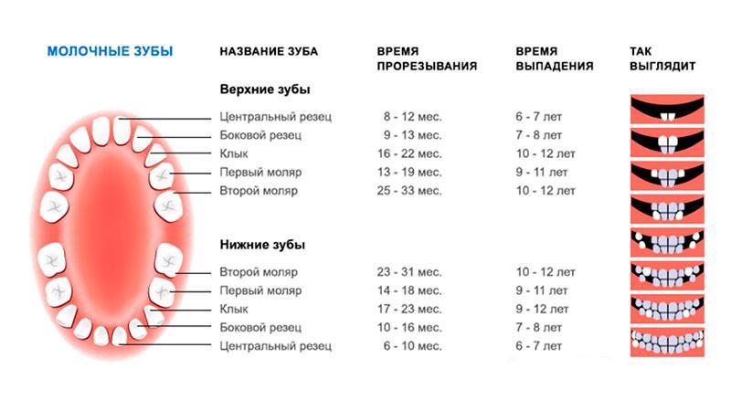 Коли ріжуться перші зуби у немовлят: у скільки місяців починають рости » журнал здоров'я iHealth 1