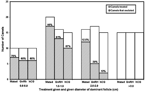 Ovulatory responses of camels with follicles of different sizes to three different ovulatory stimuli. As follicle size increases there is a significant decrease in ovulation rate.