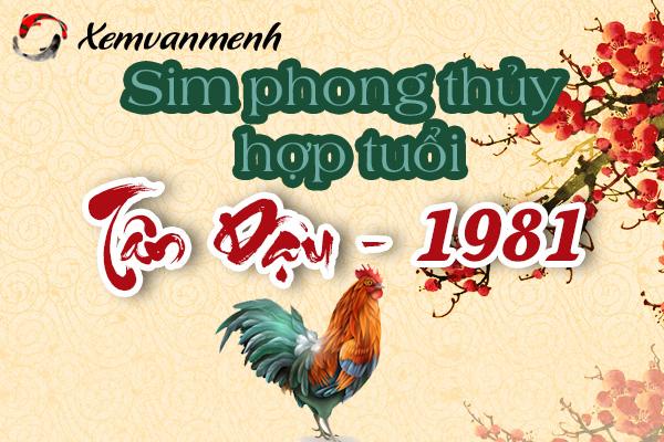 sim-phong-thuy-hop-tuoi-tan-dau-1981