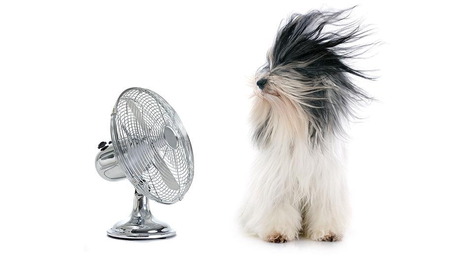 Бытовые вентиляторы в квартиру, лучшие решения по оптимальной цене