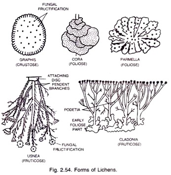 Lichens- Introduction, Structure and Reproduction.