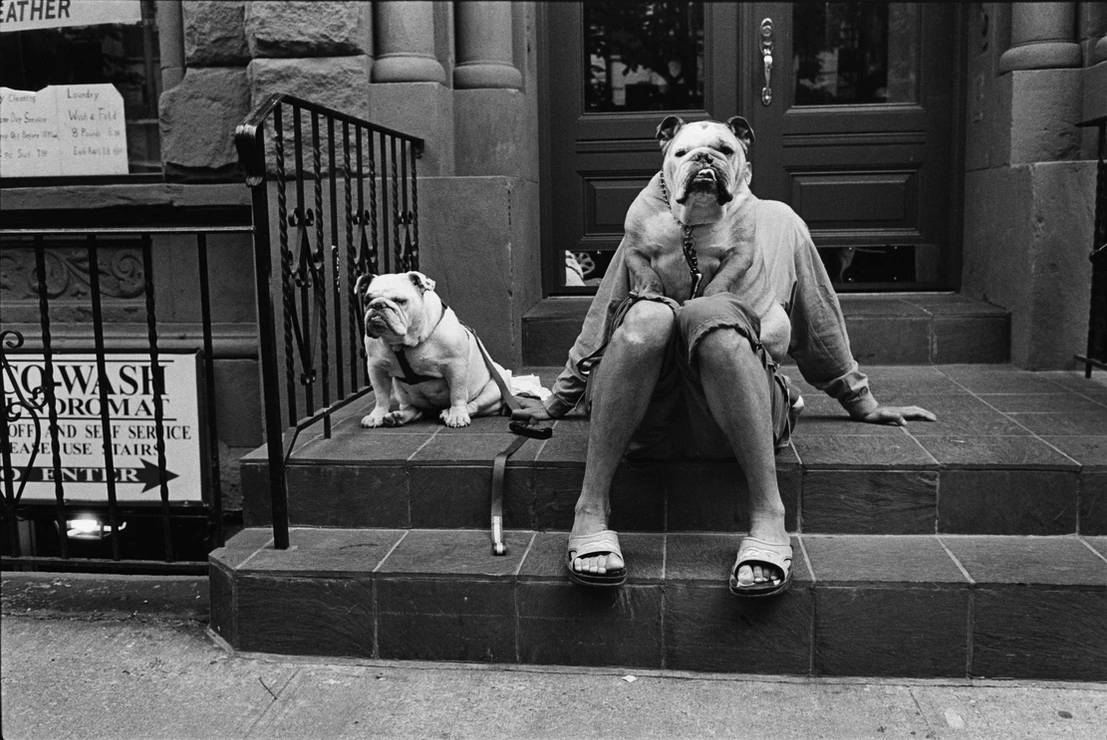 black and white dogs in nyc