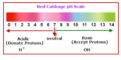 Introduction To Acid Base Indicators And The Ph Scale Lab