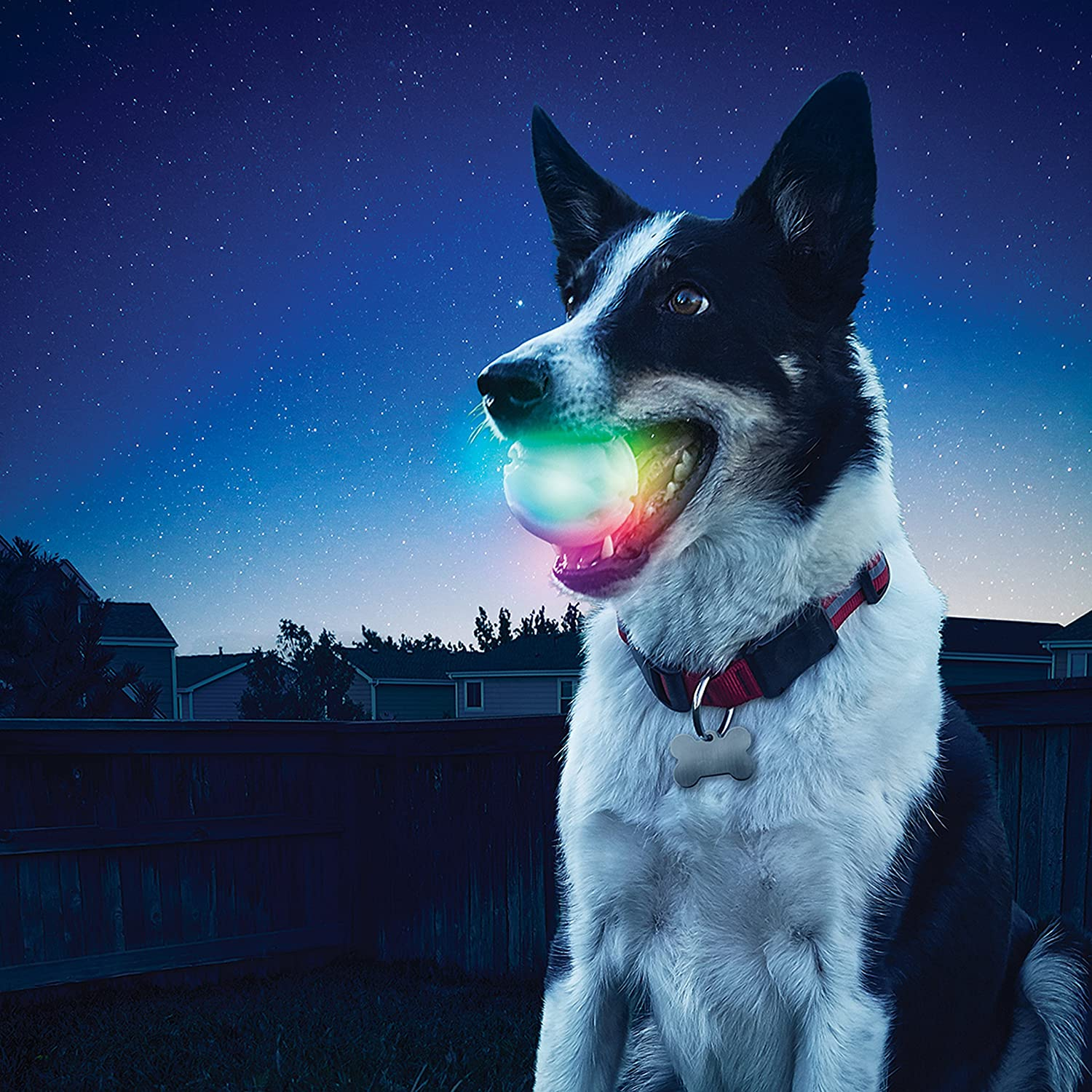Dog holding LED ball perfect for playing ball in snow.