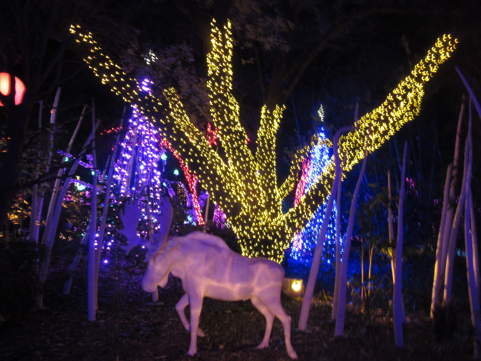 Almost Wordless Wednesday Zoo Lights At Houston Zoo