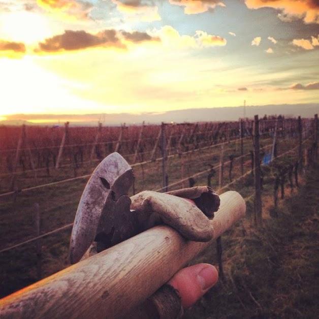 Vigneron qui arpente son vignoble à la recherche de réparations, muni d'une houe.