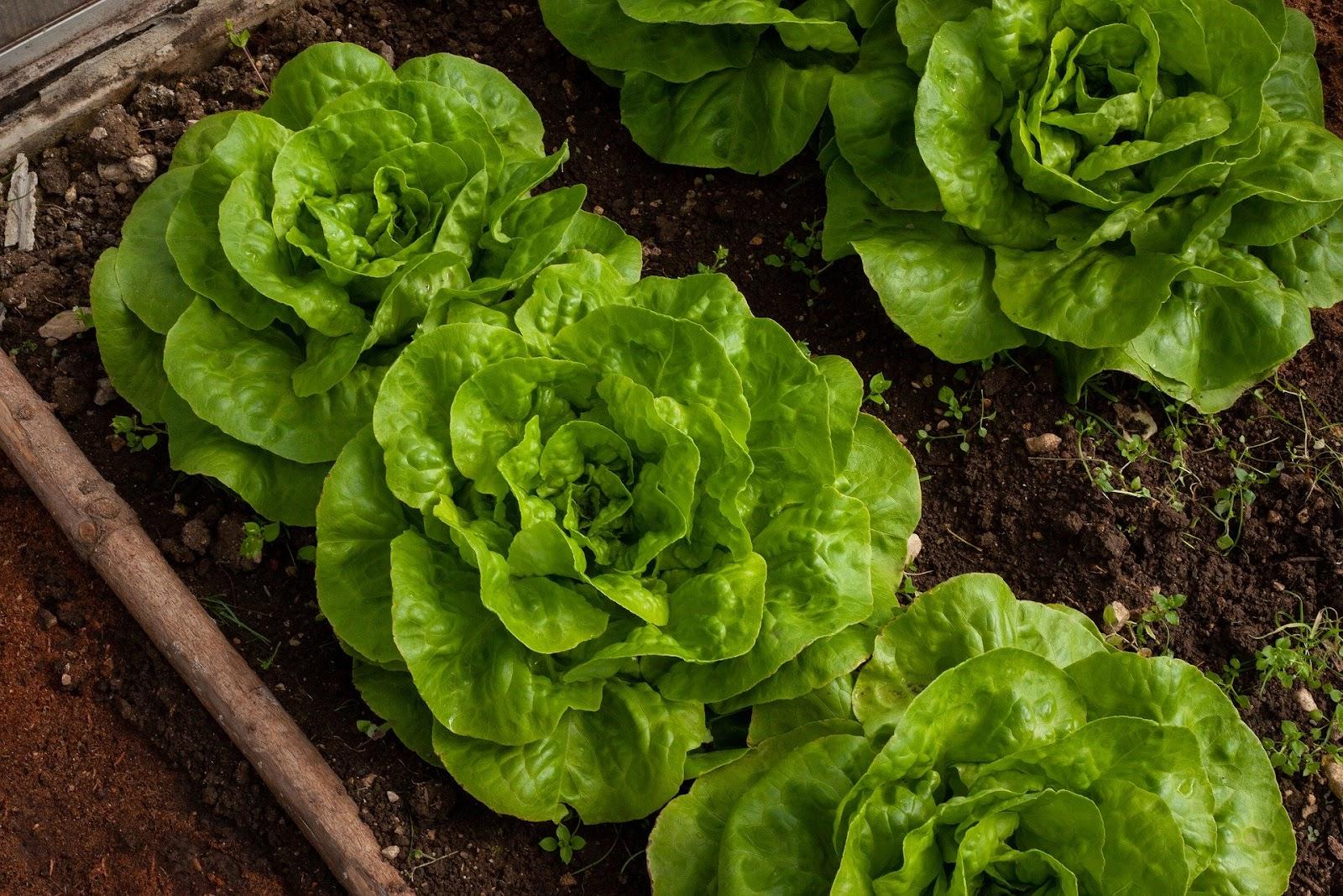 De belle salades