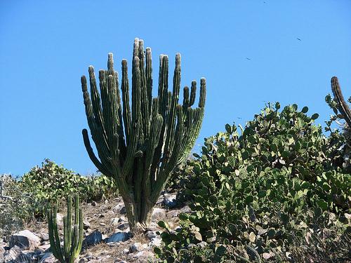 El estado que queremos visitar es sinaloa flora y fauna for Villas tortuga celestino sinaloa