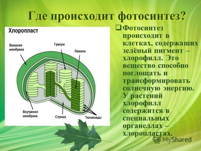 Где происходит фотосинтез