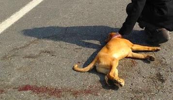 Rom gettano cani sotto le auto. Poi, o mi paghi o ti denuncio