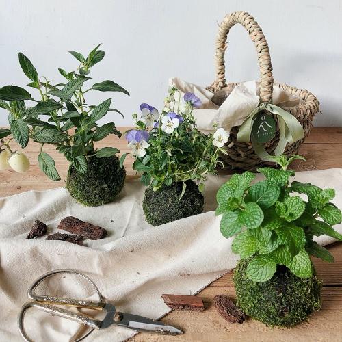 品品學堂-手作體驗-苔球製作