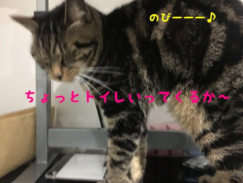 命に関わる病気!猫の尿路結石の症状と原因、予防法について