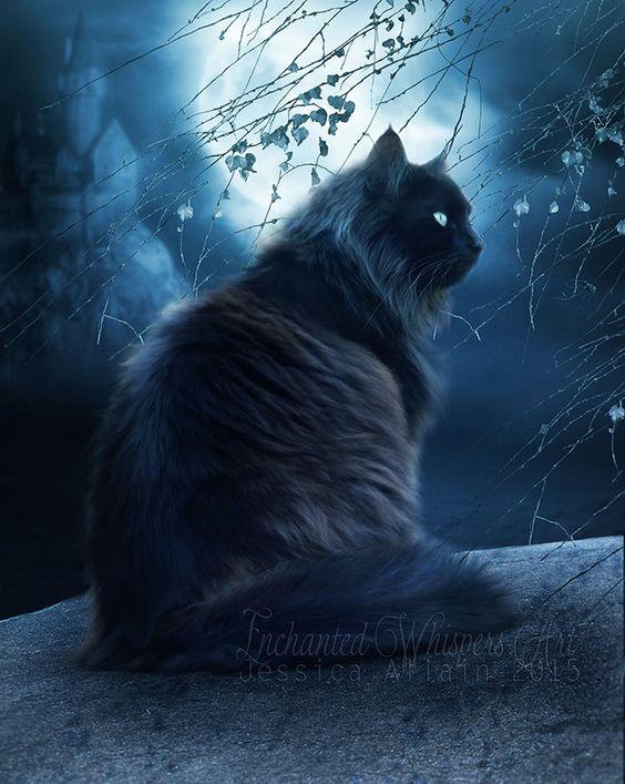 CatMoon.jpg