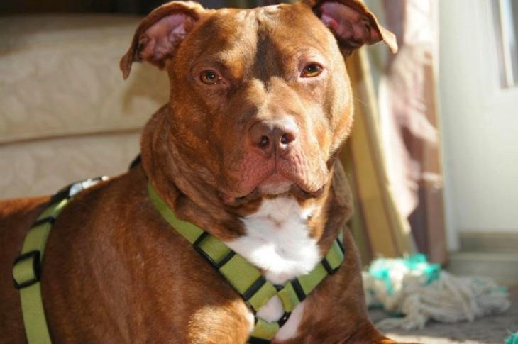 Transformación de perros adoptados (21)