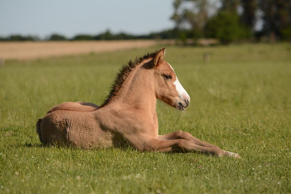 horse in grass