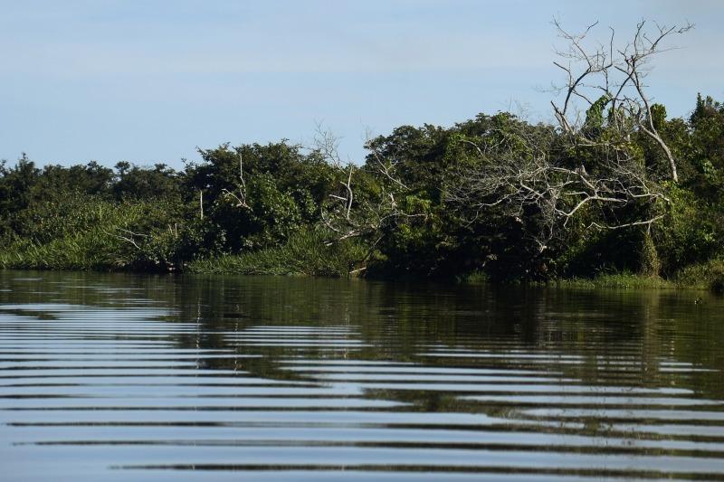 Apenas 1% das florestas tropicais do planeta ficam em manguezais. (Fonte: Fotos Públicas)