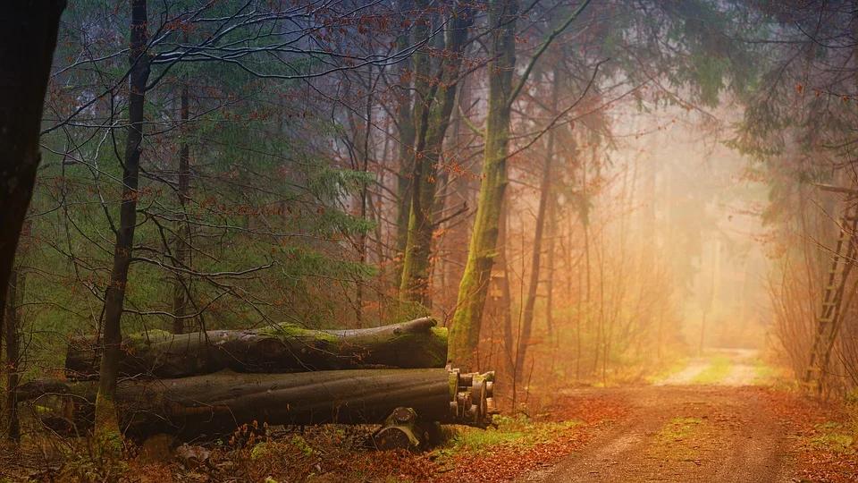 La reforestación de los bosques de Galicia tras los últimos incendios